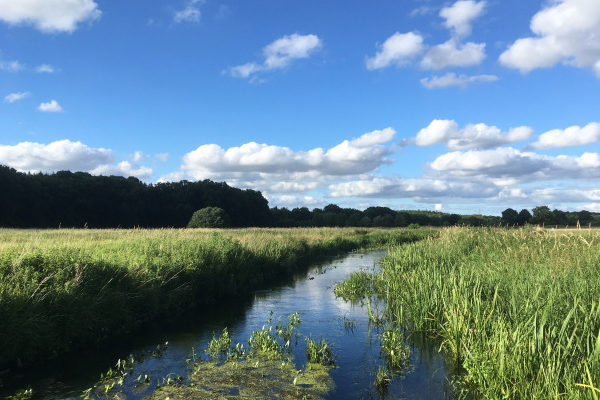 Die Eider, der längste Fluss Schleswig-Holsteins Foto: Dagmar Falk