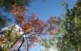 Herbsthimmel-foto-©-Dagmar-Falk einfachwandern.de