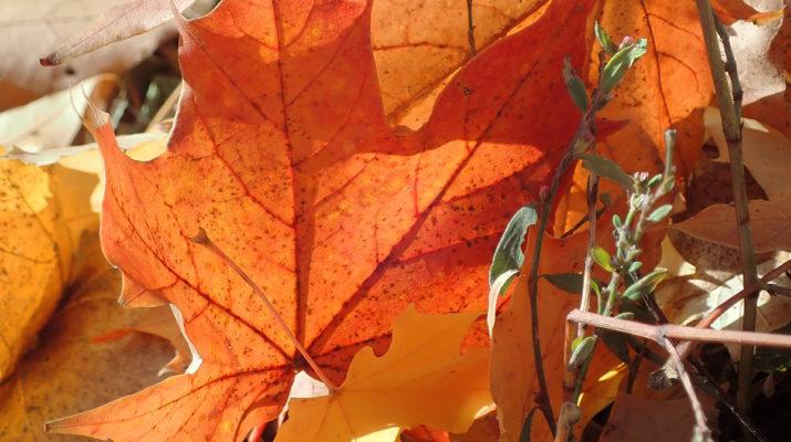 Herbstlaub Foto © Dagmar-Falk einfachwandern.de