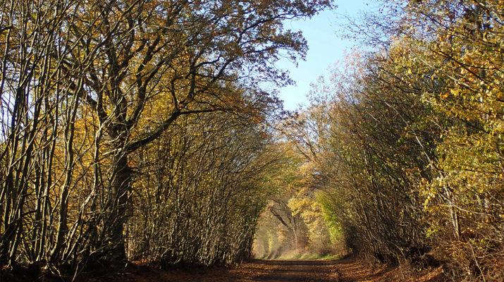 Herbsttunnel © Dagmar-Falk einfachwandern.de